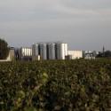 Vino Rosso DOP Leverano bottiglia 0,75 L Salento