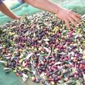 Dose 5 L Santa Lucia Natives Olivenöl extra ausgeglichen