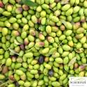 Lattina mignon monodose 100 ml - Olio Extravergine Boschino fruttato