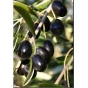 Olio vergine di oliva Dolce Terra Russa lattina 5 L